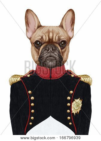 Portrait of French Bulldog in military uniform. Hand-drawn illustration, digitally colored.