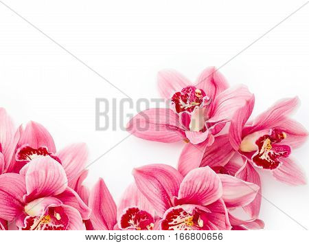 Beautiful orchid flowers isolated on white background