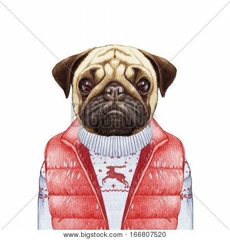 Animals as a human. Pug Dog in down vest and sweater. Hand-drawn illustration, digitally colored.