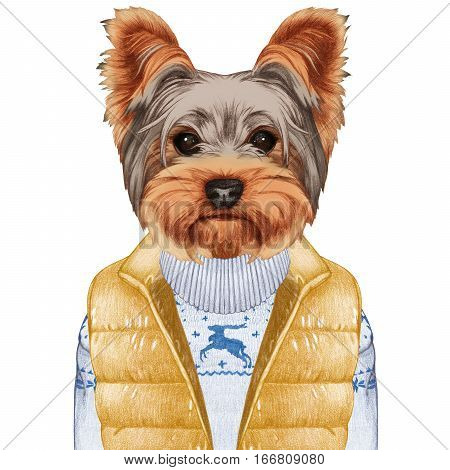 Animals as a human. Yorkshire Terrier in down vest and sweater. Hand-drawn illustration, digitally colored.