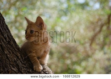 Kitten exploring in a tree, curious young animal.