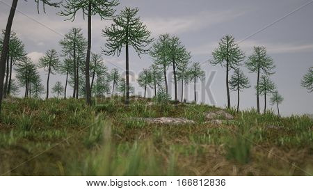 3d illustration of the ancient araucaria tree grove