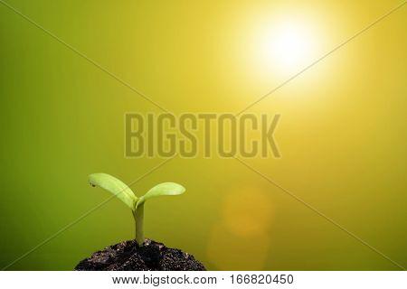 Plant Seedling Growing On Fertile Soil