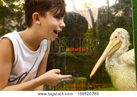 teenager boy in vietnam ho chi mihn zoo with white pelikan close up photo