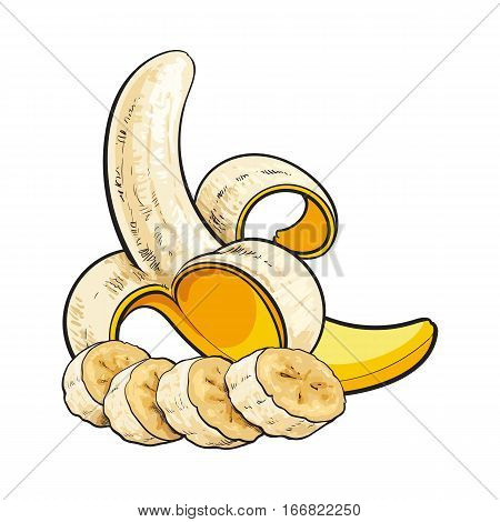 Ripe banana - open, peeled and slices chopped into pieces, sketch style vector illustration isolated on white background. Realistic hand drawing of open, peeled banana and banana slices into pieces
