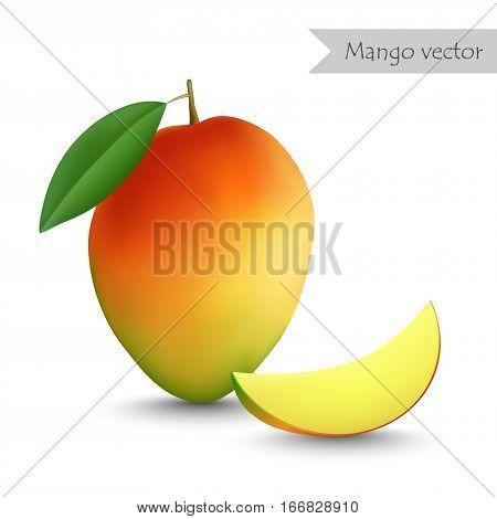 Mango vector isolated on white background. Mango slice.