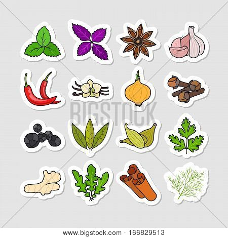 Herbs and spices vector stickers. Hand drawn colored condiments