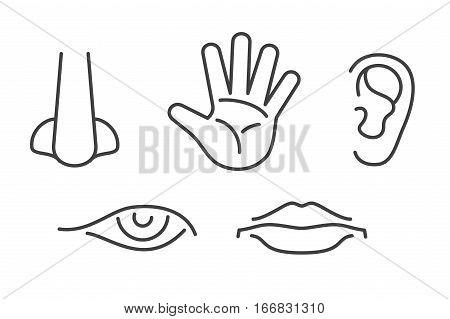 Five senses vector icons set isolated white. Human sense icon illustration