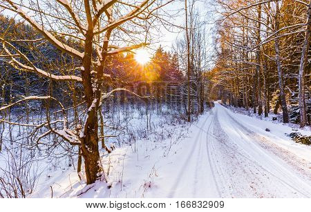 Forest road covered with snow at sunset. Trees illuminated by sunlight. Moravian landscape Melkov.