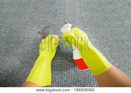 Person Hand Wearing Gloves Cleaning The Grey Carpet With Detergent And Sponge