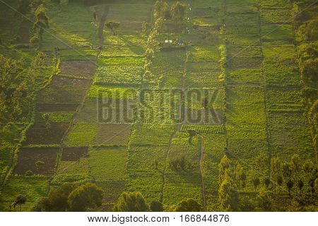 Small Squared Fields At Sunset, Great Rift Valley, Kenya