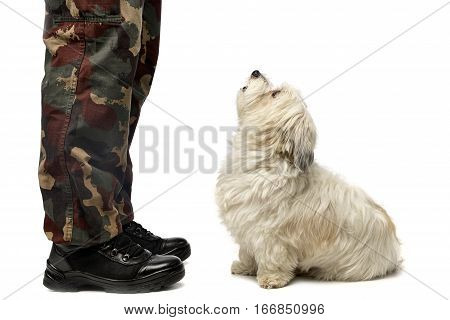 A Cute Havanese Dog Staring At His Owner