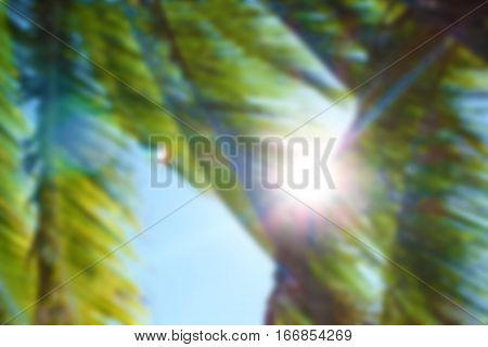 Coconut palm tree and sun blurry photo background. Tropical beach palm defocused picture. Palm tree bokeh image. Abstract exotic island travel blurry landscape. Green palm tree leaf sky view in blur