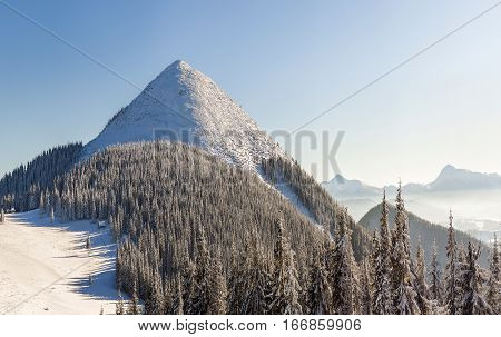 Beautiful winter panorama with fresh snow. Landscape with spruce pine trees blue sky with sun light and high Carpathian mountains on background.