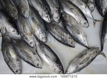 Fresh tropical fishes on the market. Grey and silver sea fishes bunch. Fish pile on table for sell. Fresh fisherman catch for lunch. Red mackerel ingredient.