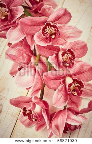 Orchid flowers on wooden background. Vintage photo