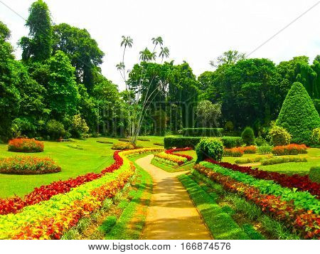Peradeniya, Sri Lanka - May 2, 2009: The Peradeniya Royal Botanical Garden Kandy, Sri Lanka on May 2, 2009. The Botanical Garden Includes More Than 4000 Species Of Plants, Including Of Orchids, Spices, Medicinal Plants And Palm Trees