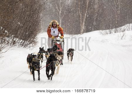 Calumet, MI - March 1, 2015:  CopperDog 150 sled dog race.  Teams traverse 150 miles over 3 days during the annual event, which starts and ends in historic Calumet, Michigan.  Musher shown is JR Anderson.