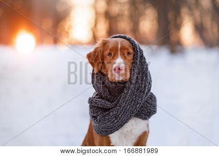 Dog In A Park On The Nature, Winter