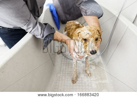 An image of bathing a cute dog