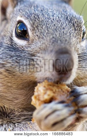 Chipmunk in Grand Canyon National Park, Usa.