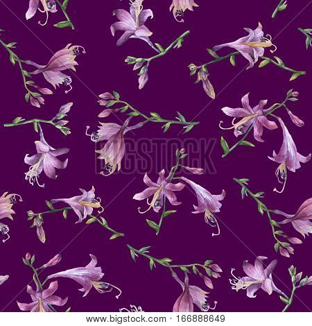 Seamless pattern with branch of purple hosta flower. Lilies. Hosta ventricosa minor, asparagaceae family. Hand drawn watercolor painting on purple background.