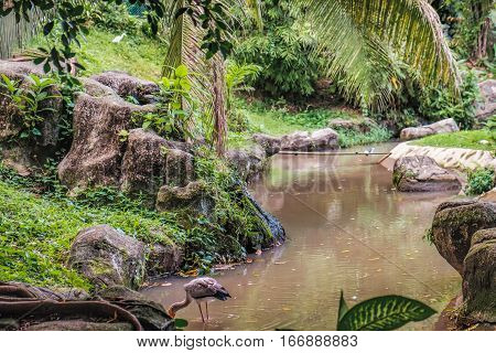 Landscape of Kuala Lumpur Bird Park with artificial pond and tropical trees, Kuala Lumpur, Malaysia. Yellow-billed stork standing in water and fishing. Selective focus