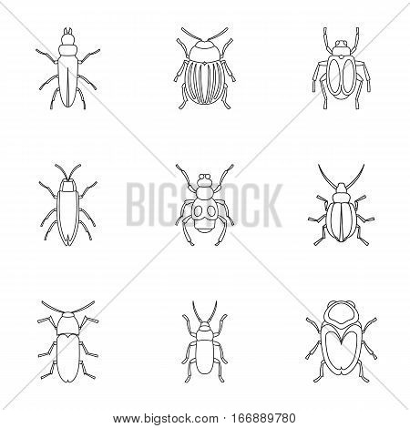 Order coleoptera icons set. Outline illustration of 9 order coleoptera vector icons for web