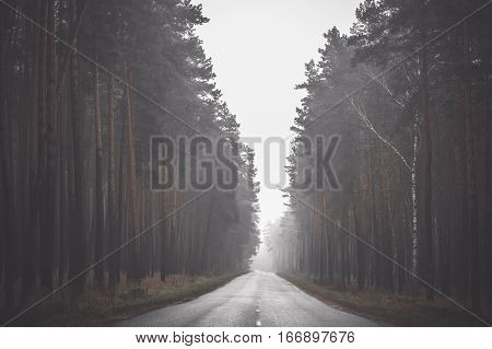 Empty countryside asphalt road in a foggy day in the wood. Travel concept. Toned picture