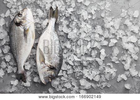 Two fresh dorado or gilthead breams on stone background with ice
