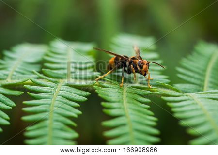 closeup of Wasp on tree in tropical forrest