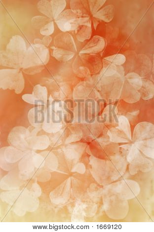 Background Of Clover Leaves