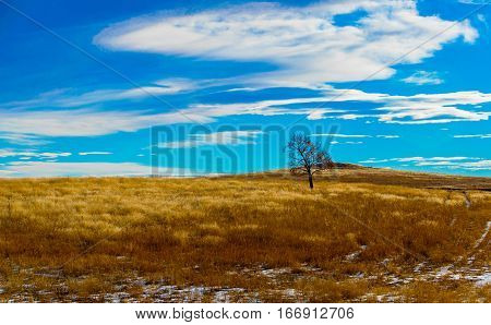 A Tree Stands Alone on the Prairie