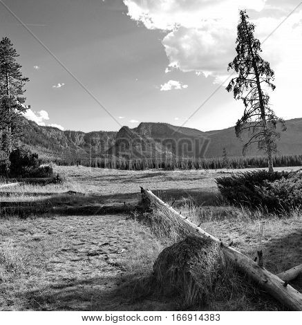 A field with both new trees and dead trees reaching into the sunny sky along with logs boulders wild grasses and rugged hills in the background.