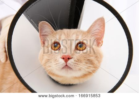 Red tabby cat in cone of shame