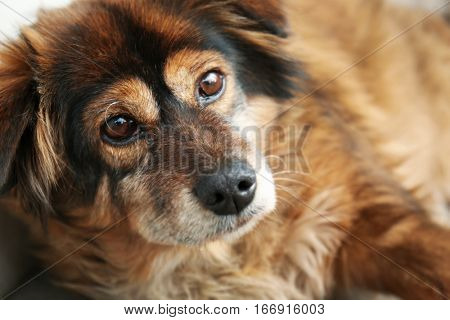 Closeup portrait of cute homeless dog on the street