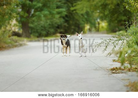 Stray dogs walking outdoors