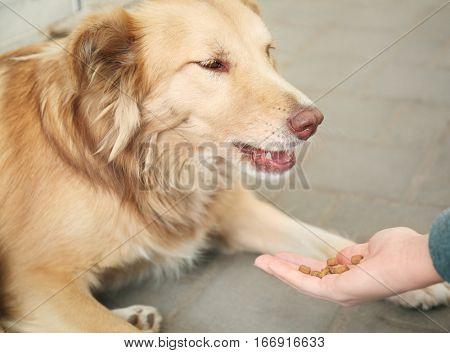 Woman feeding homeless dog on the street, closeup