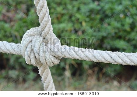 Rope knot line tied together with nature background,as a symbol for trust, teamwork, coordination or collaboration.
