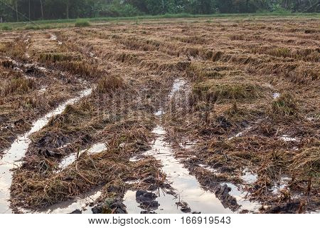 Harvested wet farm texture for blur background