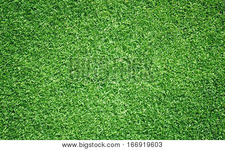 Grass Pattern Textured Background.
