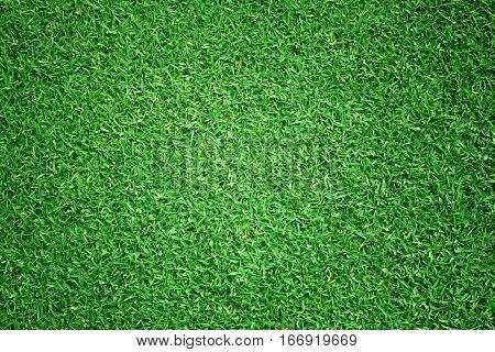 Grass Pattern Textured Background.