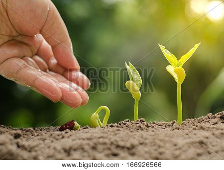 Plant Seed Seedling and Agriculture concept,Male hand sowing seed with sequence of seed germination to sprout growing over sunlight