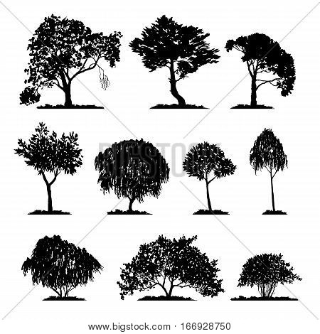 vector set of deciduous trees, hand drawn isolated natural elements