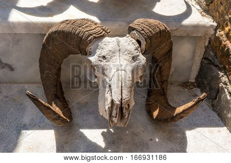 rams head with full curl horns