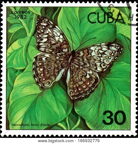 CUBA - CIRCA 1982: Postage stamp printed by Cuba shows butterfly Hamadryas ferox diasia, series Butterflies