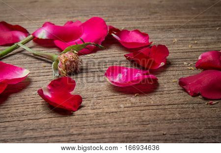 Breken Heart Concept With Rose