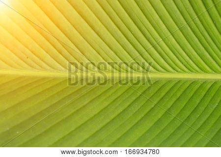 Green Texture Elephant Ear Leaf