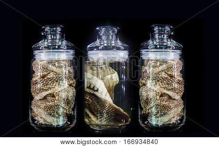 Snake Skin In Bottle For Serum
