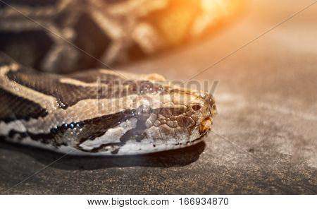 Brown Snake In Dark Light